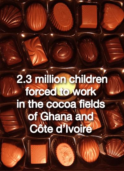 children work in cocoa fields