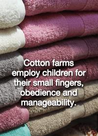 children work in cotton farms