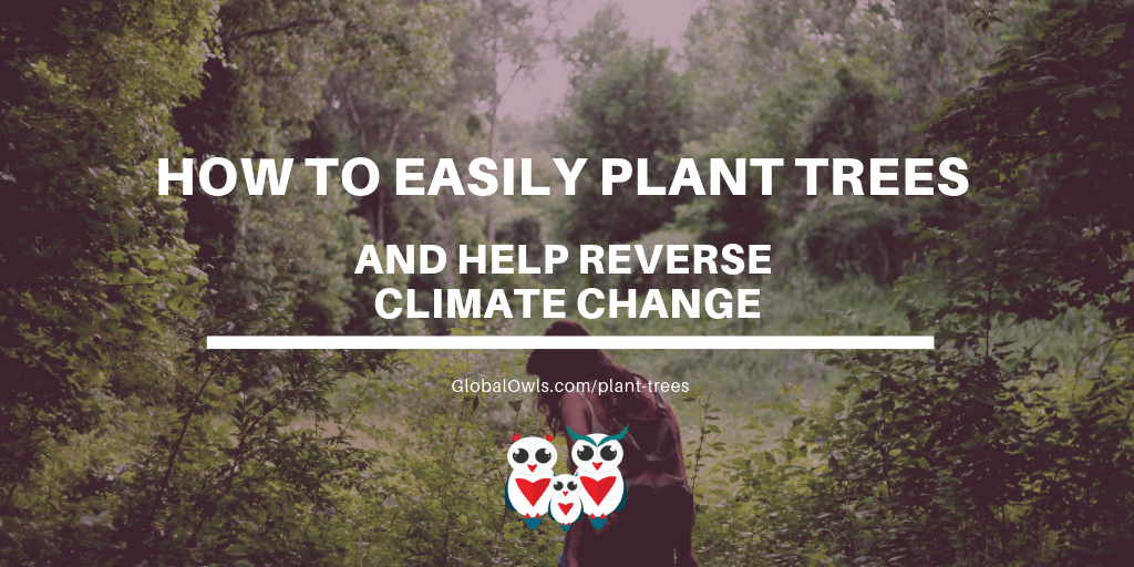 How to easily plant trees and help reverse climate change